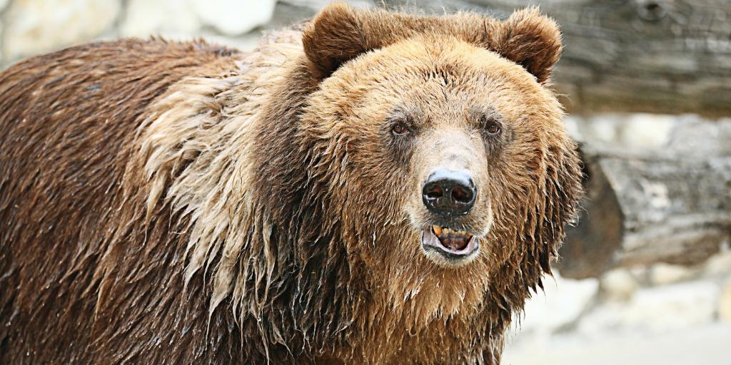 Bear representing bear financial markets